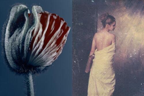 Vergängliche Schönheit. Analog/Polaroid-Transfer auf Aquarell. 2011